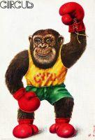 Singe boxeur